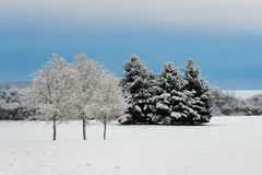 Winter. Danish winter landscape with rime Stock Photography