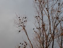Birds in tree with grey winter sky stock photo