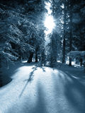 Winter dawn. The sun rises, the light shining through spaces inbetween the snow-covered trees Stock Images