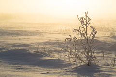 Winter Dawn Stock Images