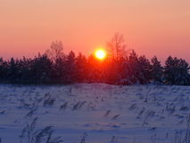 Winter dawn Royalty Free Stock Photography