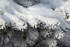 Winter day. Royalty Free Stock Photography