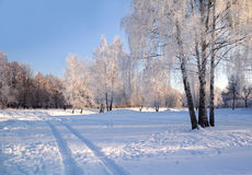 On The Winter Day. On the bright and sunny winter day in the town of Korolev not far away from Moscow near the urban canal Stock Photo