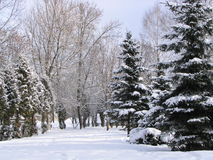 Winter day 2. Winter park Royalty Free Stock Photos