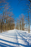 Winter day. Sunny winter day in the forest Royalty Free Stock Photo