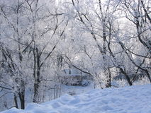 Winter day. Trees covered by hoarfrost stock photos