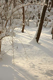 Winter day. One winter day Stock Photography