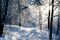 Winter day Stock Image