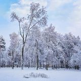 Winter day in the city park. The trees are covered with snow.  Stock Photos