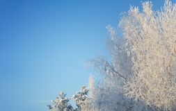 Winter day in the forest royalty free stock photography