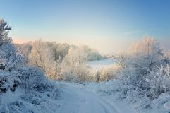 Winter day in the forest royalty free stock images