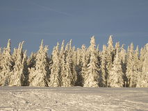 A winter day in the forest. Snowy trees in the mountains Royalty Free Stock Photos
