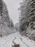 Winter day in the forest. Stock Images