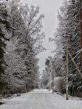 Winter day in the forest. Royalty Free Stock Photos