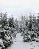 Winter day in the forest. Stock Photo