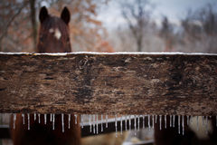 A Winter Day in the Horse Corral Royalty Free Stock Images