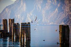 Winter day in Lake Garda - Italy Royalty Free Stock Image