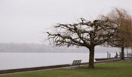 Winter day at the lakeside plane tree Royalty Free Stock Photo