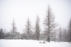 Winter trees in the snow Stock Image