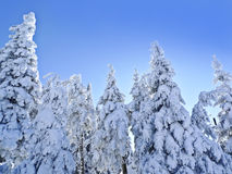 winter day in the mountain forest Stock Photography