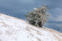Winter day in the mountains. Winter day in Crimea mountains stock image