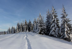 Winter day. In the mountains, trees in the snow Stock Photos