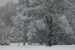 A winter day in the park. Have a walk with your dog in winter Royalty Free Stock Photos