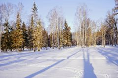 winter day park snow cold sunlight shadow blue sky trees outdoors stock photography