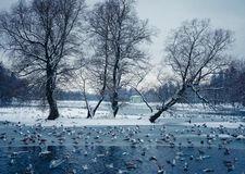 Winter park tree lake cold day. Winter day park tree cold day river nature lake birds royalty free stock photo