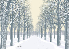 Winter day. Prospect of an alley with snowy trees silhouettes in a park. Vector illustration Royalty Free Stock Images