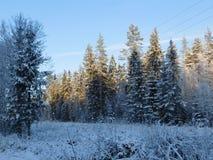 Winter day. Stock Photo