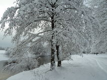 Winter day by the river Royalty Free Stock Photography