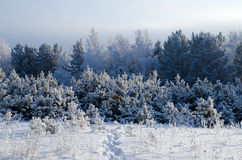 Winter day in Siberia Stock Photos
