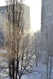 Winter day. The solar winter day in the city Royalty Free Stock Photography