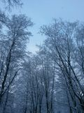Winter day in the of St. Petersburg. Royalty Free Stock Photography