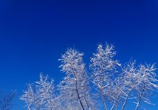 The Winter day. Sunny and snowy fabulous winter day Stock Photography