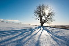 Winter day, tree with shadow and sun, Iceland. Winter landscape, tree with shadow and sun, Iceland Royalty Free Stock Photography