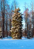 Tree in snowy park. Winter day. Tree in snowy park Royalty Free Stock Image