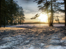 Winter day with trees and snow Royalty Free Stock Image