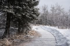 Frosty winter path through a forest. stock image