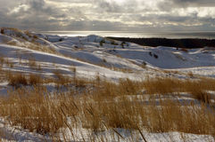 Winter in Dead dunes. Winter by the sea in Lithuania, Curonian Split; Fields of bent grass and snow Royalty Free Stock Photography