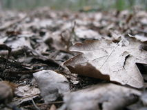 Winter dead leaves Stock Photos
