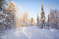 Winter in deep forest. Stock Images