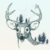 Winter deer Royalty Free Stock Photos