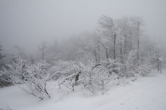 Winter in den Beskydy-Bergen stockfotos