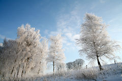Winter in denmark. In the morning sun in winter in denmark, a field with trees stock images
