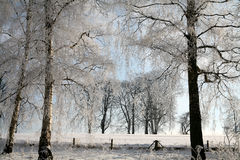 Winter in denmark. In the morning sun in winter in denmark, a field with trees royalty free stock images