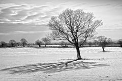 Winter depression. Or S.A.D ( seasonal adjustment disorder ) concept with this frozen landscape Stock Photo
