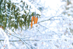 Winter in der Natur Stockfotos