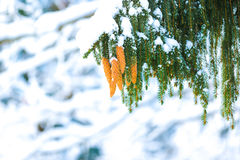 Winter in der Natur Stockfoto